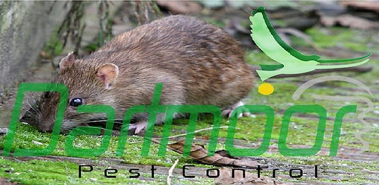 devon pest control services