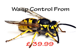 Wasp Control & Nest Removel devon & Cornwall