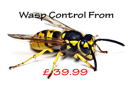 Wasp Control & Nest Removel devon & Cornwall