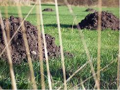 mole control dartmoor pest control