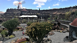 Giardino dei cactus (1)