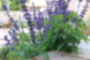 natural_garden9_2.jpg
