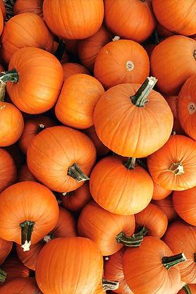 pumpkins-1529604270_edited.jpg
