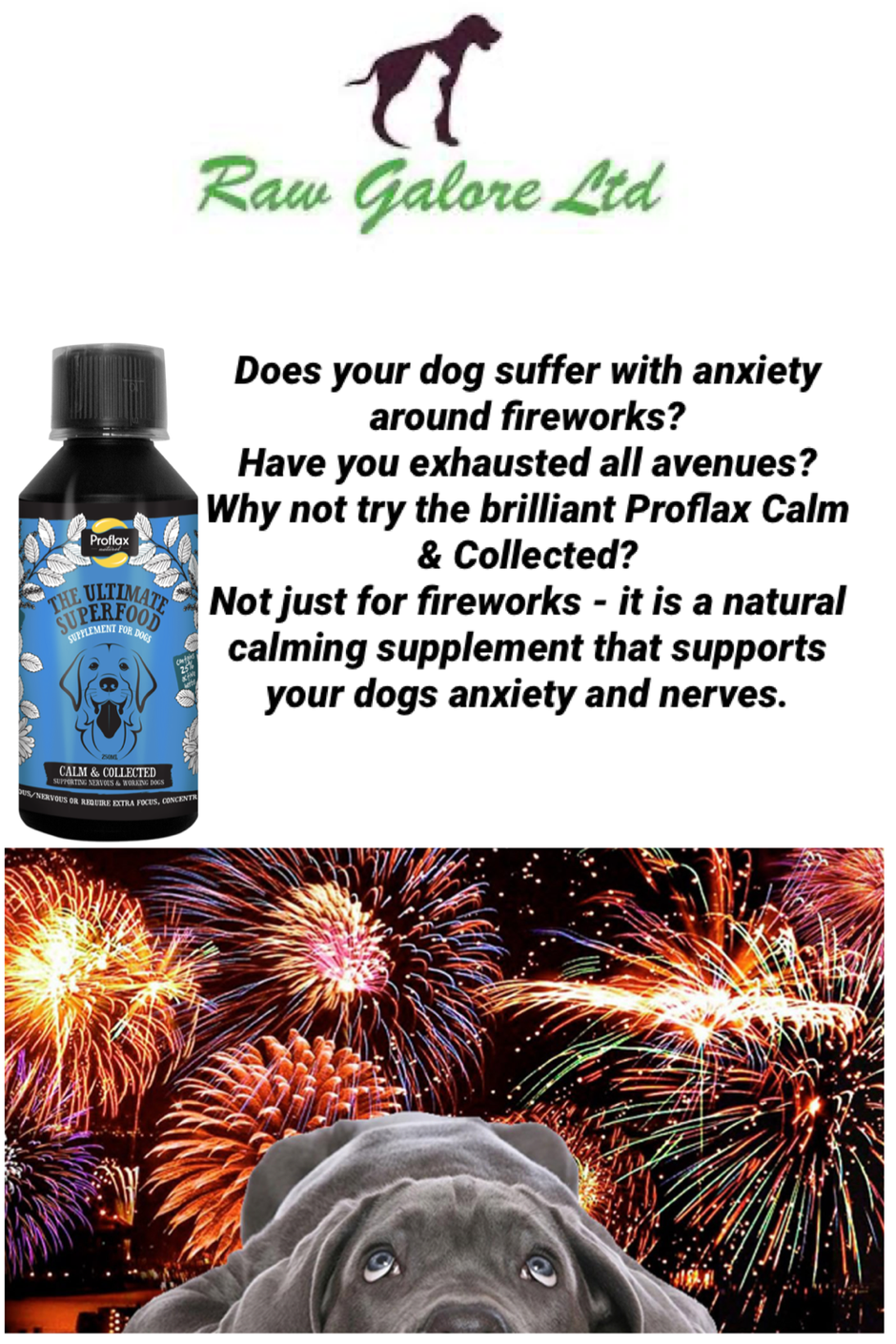 Does your dog suffer with anxiety?