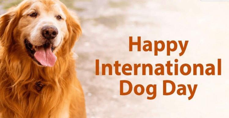 Happy National Dog Day 🥳🥳