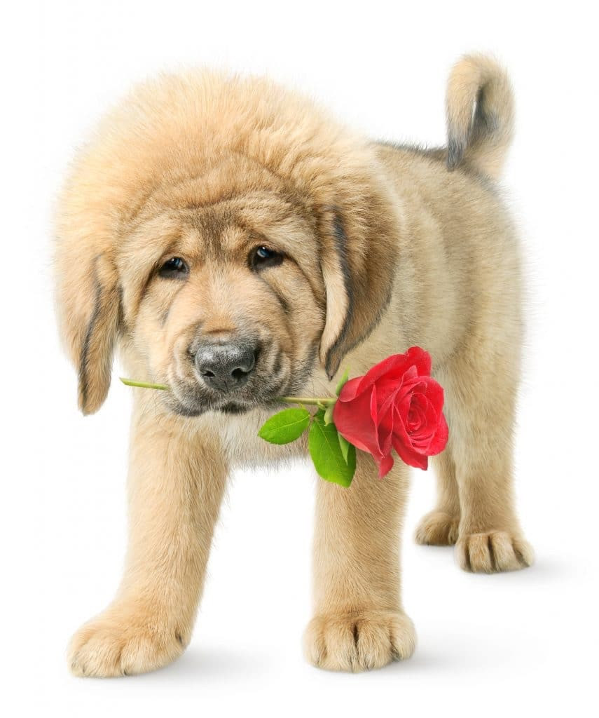 For the love of dogs 💓💞