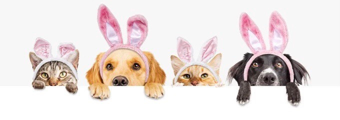 Happy Easter - Please remember what items are poisonous for dogs