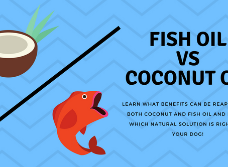 Coconut Oil or Salmon Oil how do you choose??