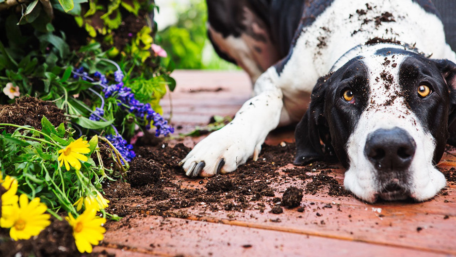 Natural worming for your dog