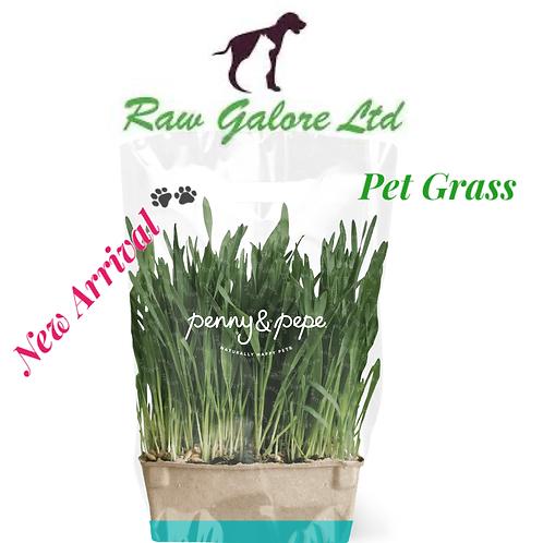 Penny & Pepe Pet Grass