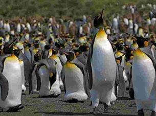 antartic circle.jpg