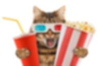 cat watching a movie.jpg