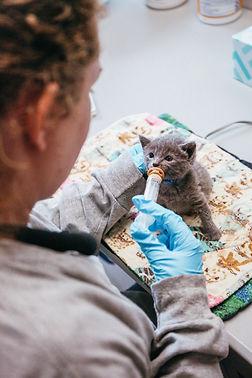 Kitten Nursery 5-14-2019 (11).JPG