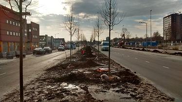 Bomen aanplanten voor de Gemeente Assen
