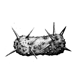 The Ol Spikey Pickle