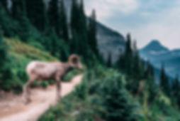 2018.08.11_Montana-4934-Edit.jpg