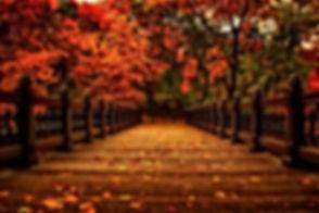 amazing-autumn-beautiful-colorful-Favim.