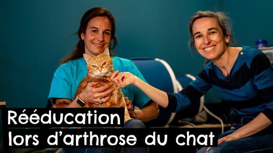 Rééducation lors d'arthrose du chat