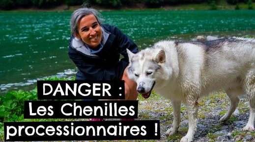 DANGER : Les Chenilles processionnaires !