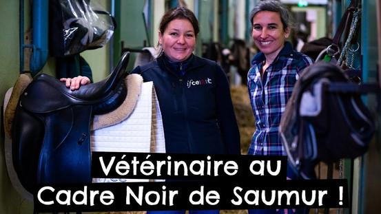 Vétérinaire au Cadre Noir de Saumur