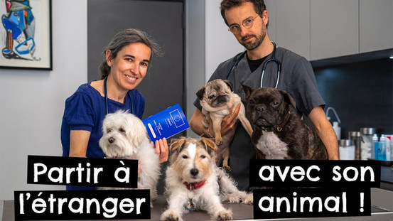 Partir à l'étranger avec son animal !