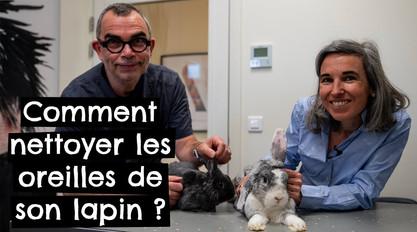 Comment nettoyer les oreilles de son lapin ?ès !