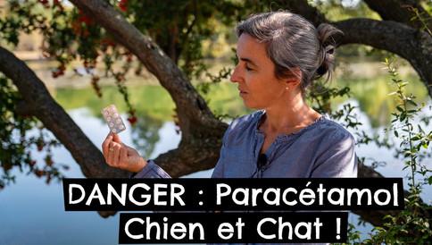 DANGER : Paracétamol Chien et Chat !