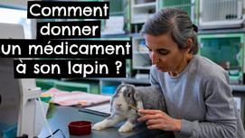 Comment donner un médicament à son lapin ?
