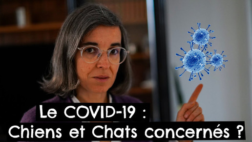 Le COVID-19 : Chiens et Chats concernés ?
