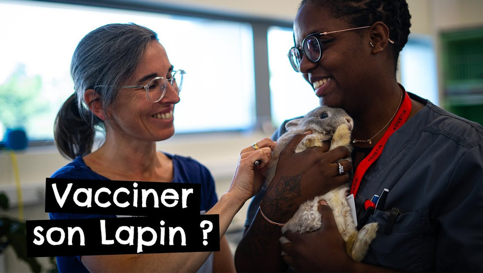 Vacciner son Lapin ?