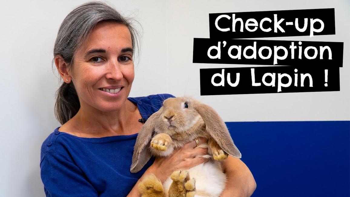Check-up d'adoption du Lapin !