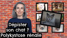 Dépister son chat ? Polykystose rénale