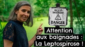 Attention aux baignades : La Leptospirose !
