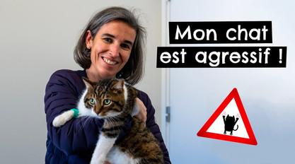 Mon chat est agressif !: