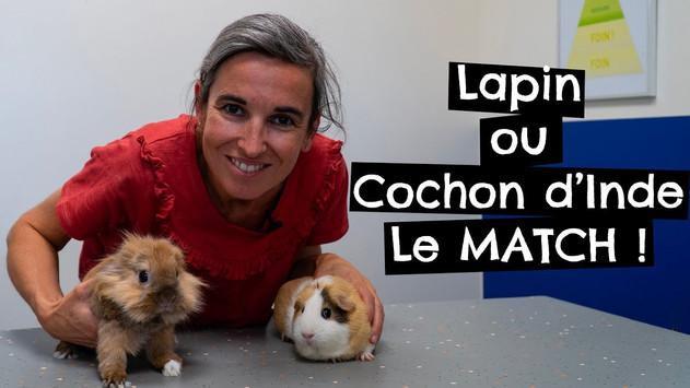 Lapin ou Cochon d'Inde. Le MATCH !