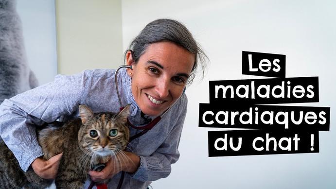 Les maladies cardiaques du chat !