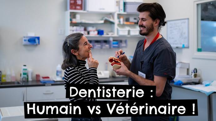 Dentisterie : Humain vs Vétérinaire !