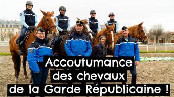 Accoutumance des chevaux de la Garde Républicaine !