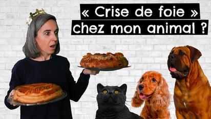 """""""Crise de foie"""" chez mon animal ?"""