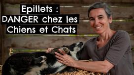 Epillets : DANGER chez les Chiens et Chats