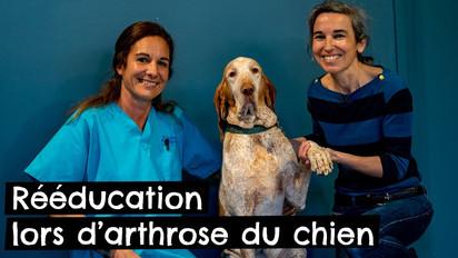 Rééducation lors d'arthrose du chien