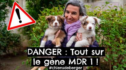 DANGER : Tout sur le gène MDR 1 !