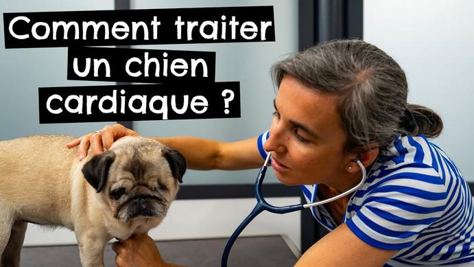 Comment traiter un chien cardiaque ?