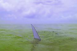 Bonefish Tail