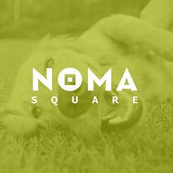 NOMA-Tinted-Backgrounds---Dog.jpg