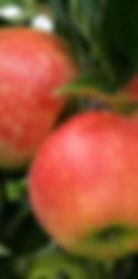 Äpfel Obsthf Kunz