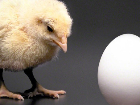 Physicists actually solved the chicken and egg conundrum