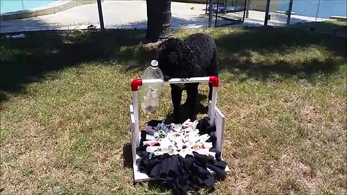 Vertical fun dog bottle treat dispenser