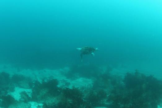 見島6.JPG
