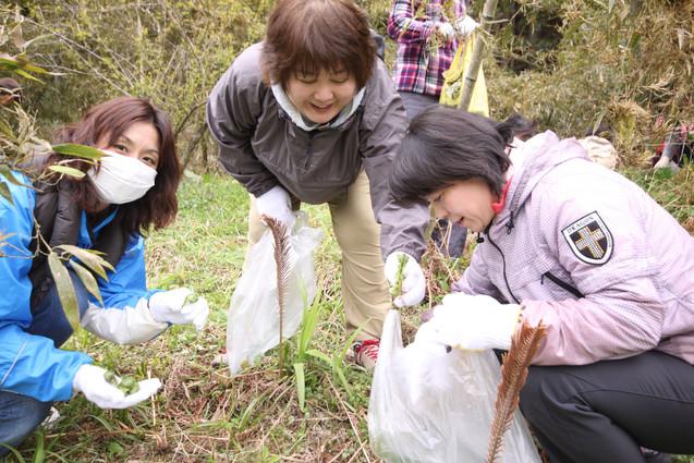 山菜採り14 (3).JPG